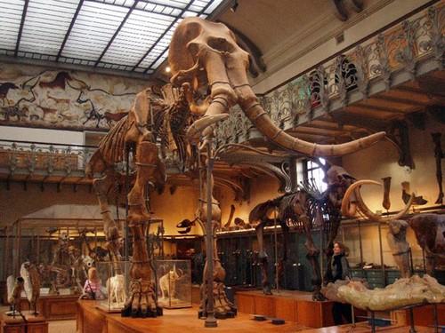Прототип скелета мамонта