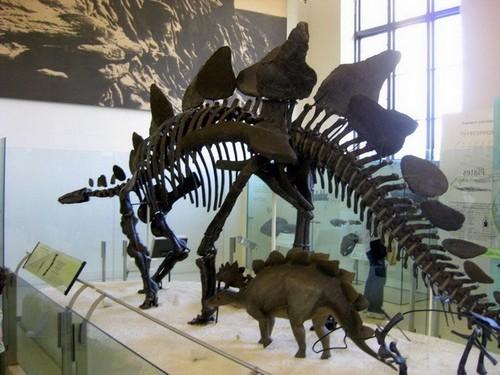 В Национальном музее естественной истории в Париже представлены различные прототипы скелетов диназавров