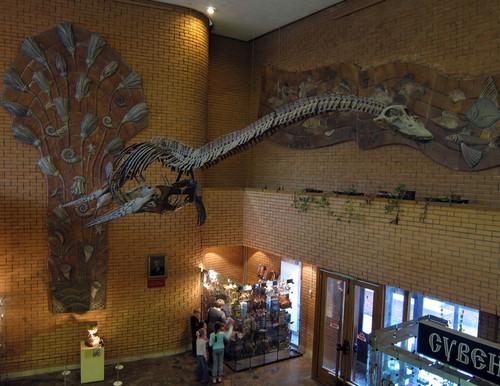 Музей динозавров - вид сверху
