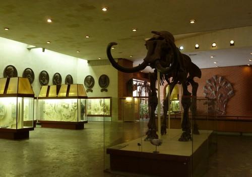 Вводный зал - скелет мамонта