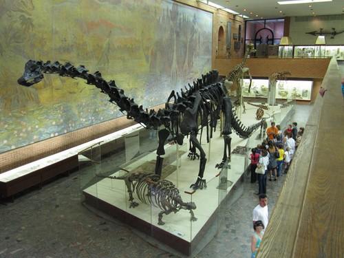 Скелет крупного динозавра
