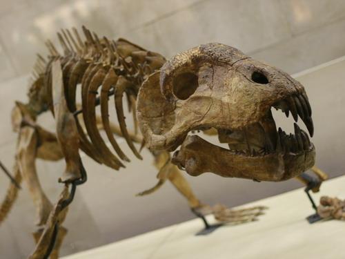 Скелет динозавра Рекса