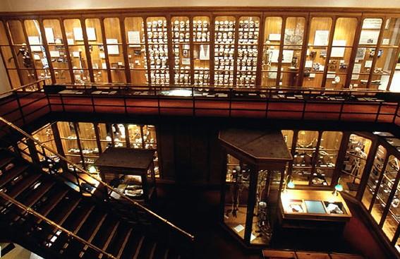 Внутри музея медицинской истории
