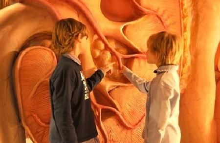 Дети в музее человеческого тела