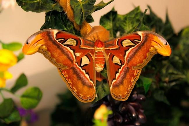 Музей бабочек в Санкт-Петербурге