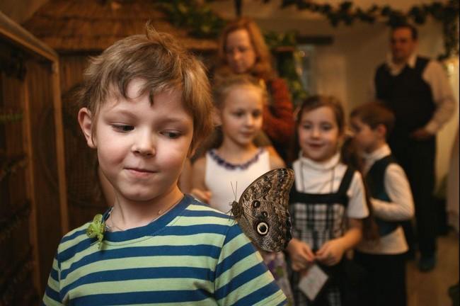 Бабочка села мальчику на плечо