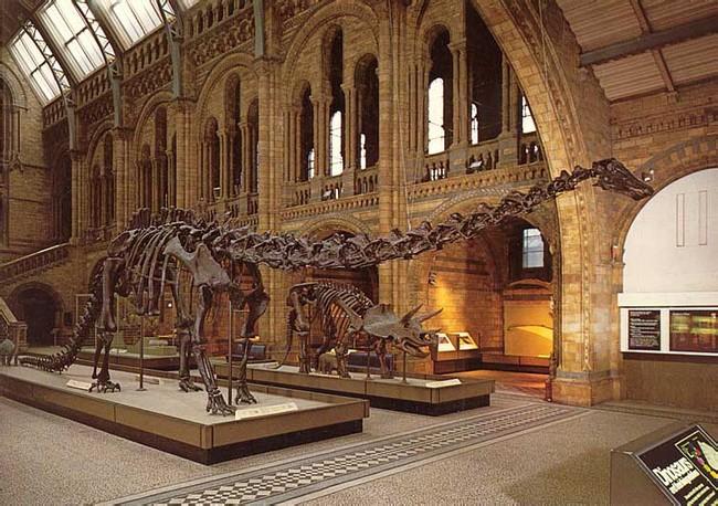 Скелет диплодока в лондонском музее естествознания