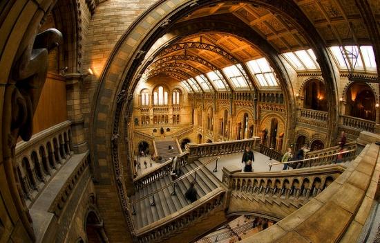 Отличное фото внутри музея естественной истории Лондона
