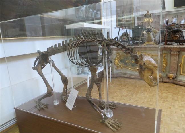 Скелет пещерного медведя