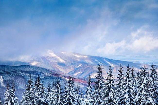 Чехия зимой - снежный лес и горы