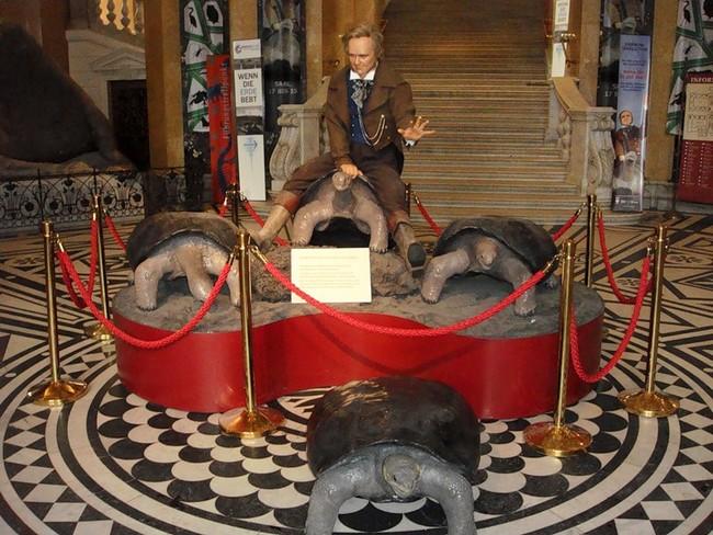 Дарвин, сидящий на галапагосских черепахах - музей естествознания, Вена