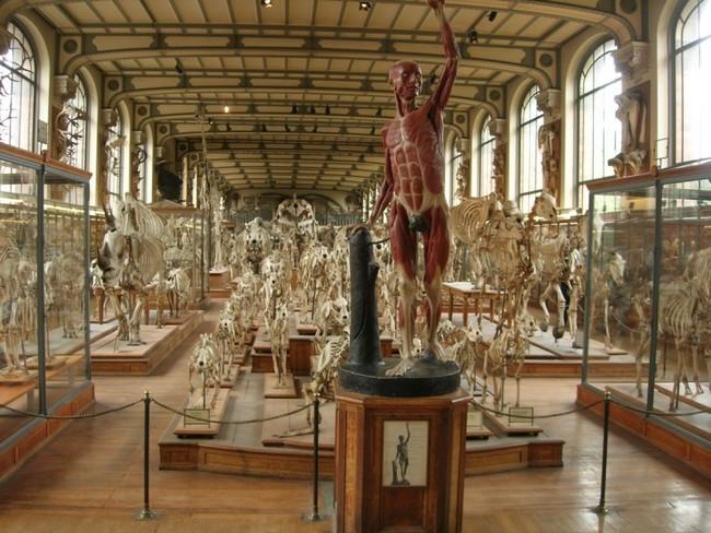 Музей естествознания в Вене, Австрия