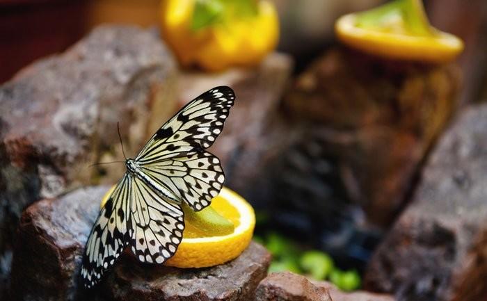 Сад живых бабочек Миндо в Петербурге